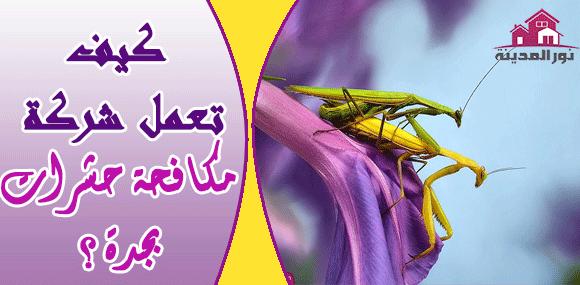 كيف تعمل شركة مكافحة حشرات بجدة ؟