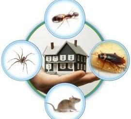 مكافحة الجراد بالمدينة المنورة ،مكافحة حشرات بالمدينة المنورة ،رش حشرات بالمدينة المنورة