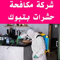 شركة مكافحة حشرات بتبوك,مكافحة حشرات بتبوك,رش حشرات بتبوك