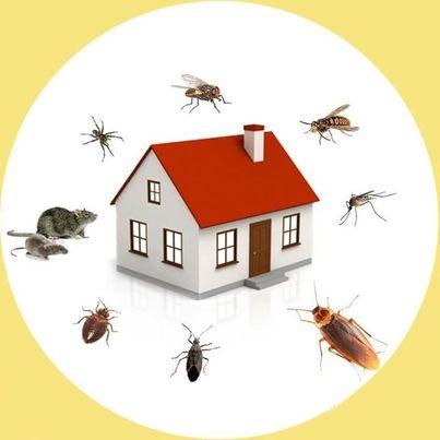 شركة مكافحة حشرات بينبع,مكافحة حشرات بينبع,شركة رش حشرات بينبع